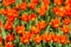 floristry Tuin, decoratieve bloemen, pluizig, met mooie bloemblaadjes royalty-vrije stock afbeeldingen