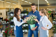 Florists Assisting Male Customer In Buying Flower Stock Images