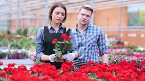 Florists examine flowers on a shelf in greenhouse. Florists satisfied with their work. Gardeners working with flowers in greenhouse. Young smiling florists men stock video footage