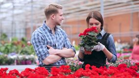 Florists satisfied with their work stock video footage