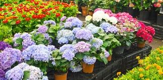Florists shop Stock Image