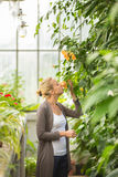 Florists woman working in greenhouse. Royalty Free Stock Photos