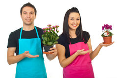 Florists workers  showing to their plants Royalty Free Stock Images