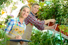 Florists. Young smiling florists men and women working in the greenhouse Stock Images