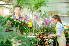 Florists. Young smiling florists men and women working in the greenhouse Royalty Free Stock Images