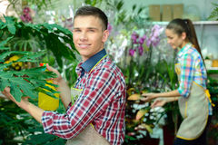 Florists. Young smiling florists men and women working in the greenhouse Royalty Free Stock Photography