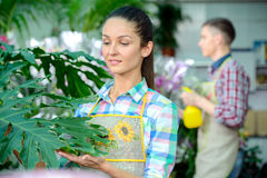 Florists. Young smiling florists men and women working in the greenhouse Stock Photo