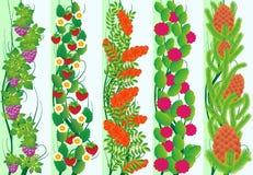 Floror royaltyfri illustrationer