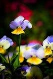 floror Royaltyfria Bilder