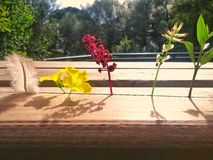 Floror l amig arkivbild