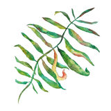 floror Vattenfärgblomma stock illustrationer