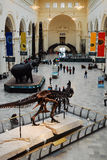 Florr principal do museu do campo imagens de stock royalty free