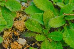 Flory Śródziemnomorski plamy salentina zdjęcie stock