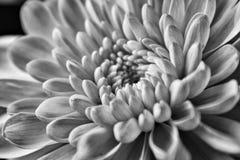 flory Obrazy Stock