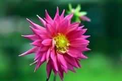 flory Fotografia Stock
