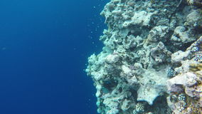 Flory i fauny blisko Błękitnej bezdenności zdjęcie wideo