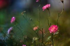 Flory i fauny przy Fraser wzgórzami Obrazy Royalty Free