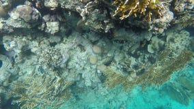 Flory i fauny rafy koralowa swobodny ruch zbiory wideo