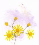 flory lato Obrazy Royalty Free