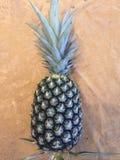 Floryda ananas obraz royalty free