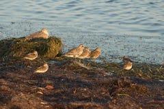 Floryda brzeg ptaki zdjęcie royalty free