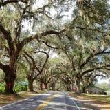Floryda drogi Zdjęcia Royalty Free