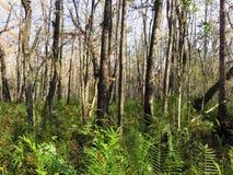Floryda drzewa i paprocie zdjęcie royalty free