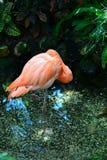 Floryda flaming Fotografia Royalty Free