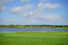 Floryda jezioro Zdjęcie Stock