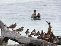 Floryda Klucze Stanu park Bahia Honda, ptaki umieszczał na beli, fotografia stock