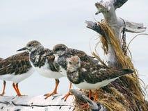 Floryda Klucze Stanu park Bahia Honda, ptaki umieszczał na beli, Fotografia Royalty Free
