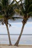 Floryda kluczy palmy 5 i zatoka zdjęcia stock