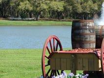 Floryda konia gospodarstwo rolne Obrazy Royalty Free