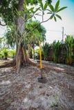 Floryda kształtować teren Zdjęcia Stock
