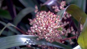 Floryda kwiaty Zdjęcie Stock