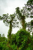 Floryda largo rośliny ogród Zdjęcia Stock