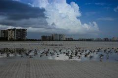 Floryda Marco wyspa Zdjęcia Stock