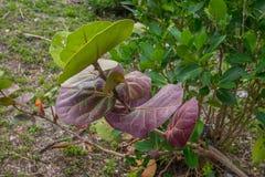 Floryda Nabrzeżny Vegetation2 Zdjęcia Stock