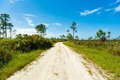 Floryda natury prezerwa obrazy stock