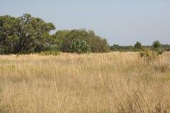 Floryda pętaczki siedlisko przy Jeziornym Kissimmee stanu parkiem Obrazy Royalty Free