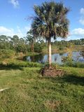 Floryda palma Obrazy Royalty Free