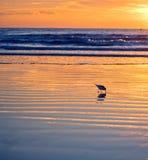 Floryda plaży ptaka wschód słońca zdjęcia stock