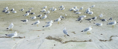Floryda st Petersburg plaża: ptaka odpoczywać obrazy stock