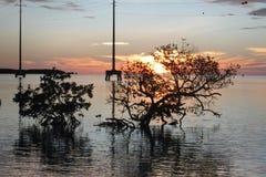 Floryda Wpisuje zmierzchu Islamorada mangrowe Zdjęcie Stock