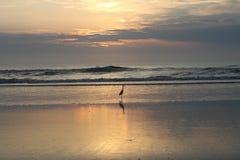 Floryda wschód słońca Zdjęcie Royalty Free