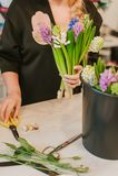Flosist som arbetar med hyacinter som gör ordningar Arkivfoto