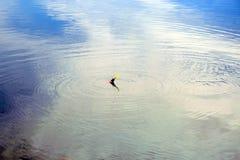Flossangeln auf einer Wasserkräuselung Stockfoto