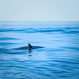 Flosse eines Haifischs lizenzfreies stockfoto