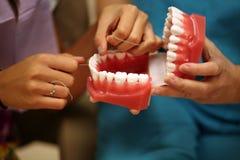 Flossing dental model Royalty Free Stock Photos