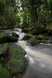 Flot 2 de forêt Image libre de droits